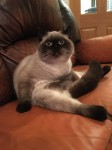 Lost Male Cat in Donoughmore
