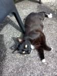 Where is nutcracker? Black and white cat
