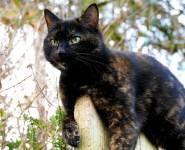 Beautiful Female Cat – Tiffin