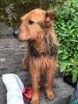 PUCA's Lost Please help her get home, Cork City Centre