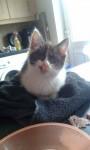 Kitten Found in Thurles