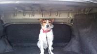 Male Parson Russell Terrier lost in Kilcornan, Limerick