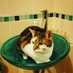 Female cat lost in Ballincollig, Cork