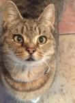 Lost cat – Cork City