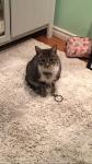 Lost cat – Munster Ontario