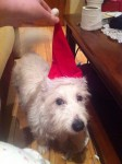 White terrier mix with one brown ear ans to the name of rosie missing now elevan hrs female 30