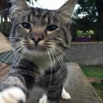 Male Cat lost in 2 Mile Inn Area