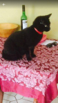 Liebchen. Lost in Aylsbury area, Ballincollig. She is a beautiful black 4 year old car. Short haired. She was wearing a red flea collar when last seen.