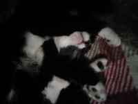 Female cat lost in Mallow
