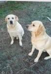 Ben and Cooper
