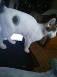 Male cat lost in Youghal