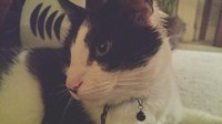 Black and White Cat lost in Cork