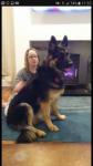 Lost German Sheppard