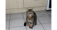 Male Cat lost in Dungarvan/Abbeyside