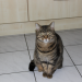 Male Cat lost in Dungarvan/Abbeyside