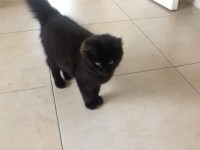 Cat lost in Aherla