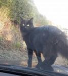 Lost – Black male cat in Carrigaline / Riverstick