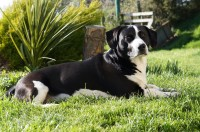 Male black and white mixed dog in Farnanes