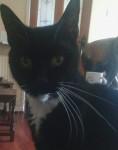 Lost/Missing Black and White Tuxedo Female Cat Mahon/Blackrock Cork