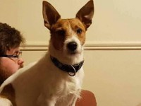 Male JR with wire hair lost in Tipperary town
