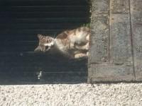 Female Cat in Mallow