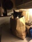 BLACK AND WHITE CAT LOST KINSALE