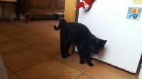 female black cat lost in kilquane/ballydavid/dingle area