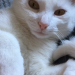 White cat missing , Midleton