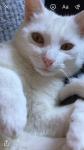 White cat missing , Midleton
