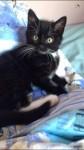 Cheeky Kitten