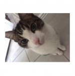 Male, Cat, White and Tabby, Middle Glanmire Road Area