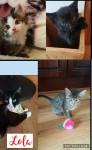 Lola's Kittens