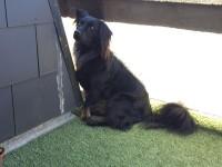Lost Dog in Cork City