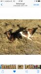 Missing 2 terriers