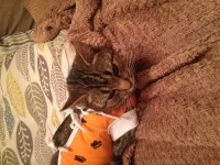 Female tabby family pet lost in Rochestown cork