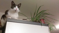 Grey & white female cat lost in Ballincollig