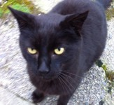 Found black cat – Rosscarbery, Cork
