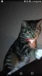 Lost cat croom limerick