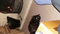 Donnybrook hill lost black long haired cat