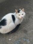 Outside Cat for adoption