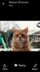 Lost ginger cat ballincollig
