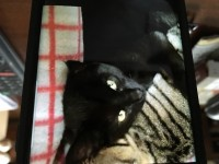 Black male cat missing from Montenotte area of Cork City