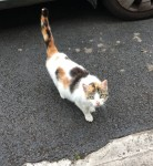 Cat found near Carrick on Suir