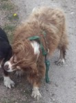 2 Missing dogs – Moycullen Co Galway