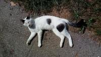 Neutered male cat, Kilmichael area