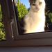 Male white/tabby cat lost in blackrock