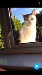 Male white/tabby cat lost in blackrock