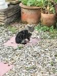 Feral Kitten #1