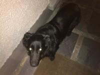 Dog found Monkstown