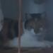 Female cat lost in Ballybunion